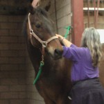 Kathryn treating horse