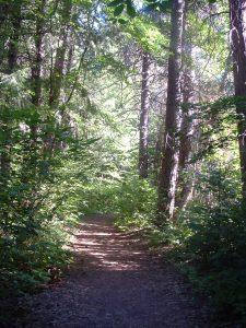 Shasta look trail in summer